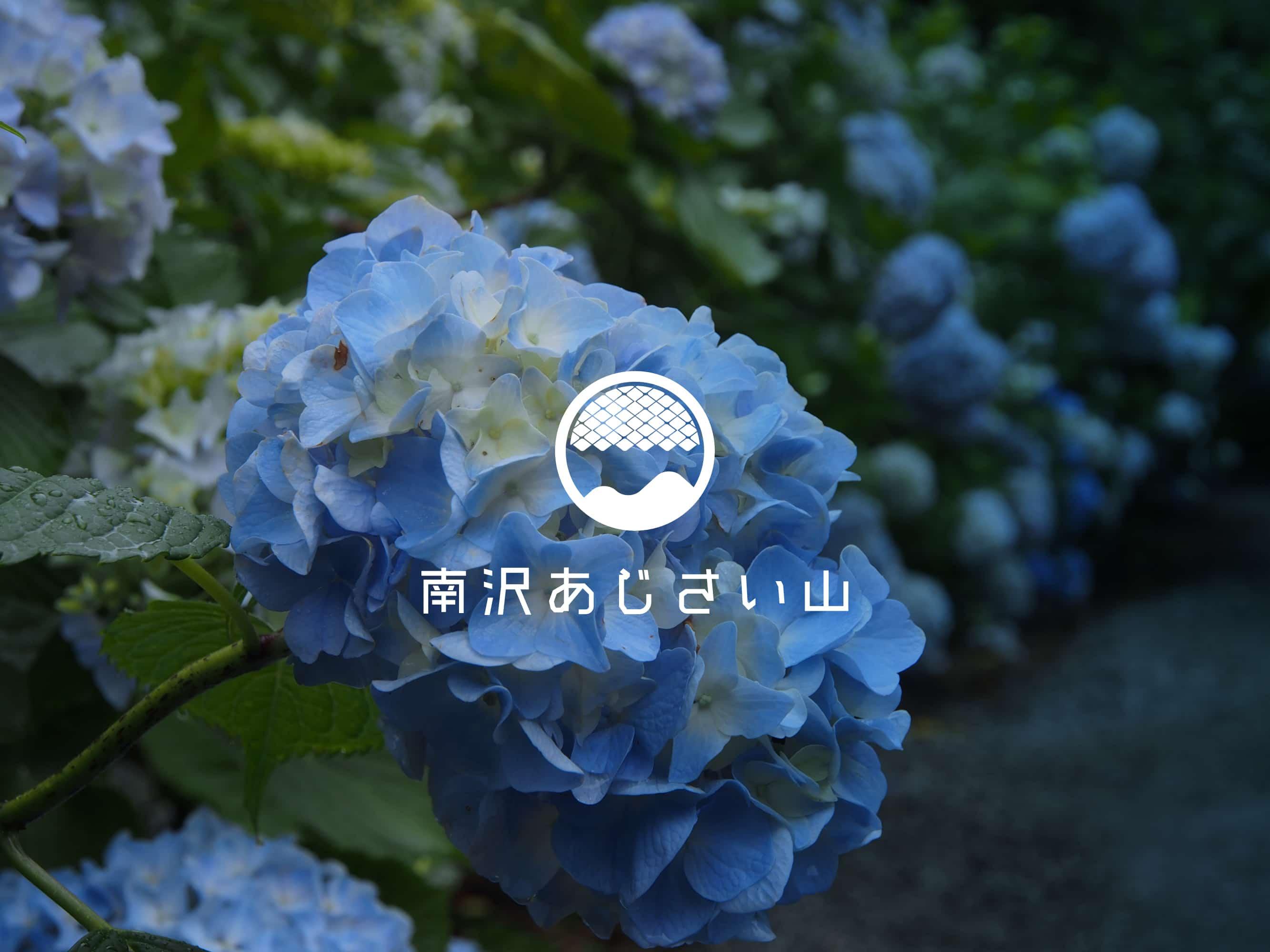 南沢あじさい山
